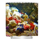 Barnacles And Sea Urchin Among Invertebrates In Monterey Aquarium-california  Shower Curtain
