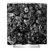Barnacles Two  Shower Curtain