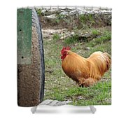 Barnyard Chicken Shower Curtain