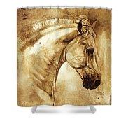 Baroque Horse Series IIi-iii Shower Curtain