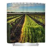 Barossa Vineyard Morning Shower Curtain