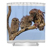 Barred Owl Family Shower Curtain