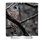 Barred Owl Hungry  Shower Curtain
