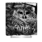 Barred Owl In Black And White Shower Curtain