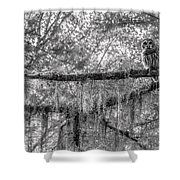 Barred Owl In Monochrome Shower Curtain