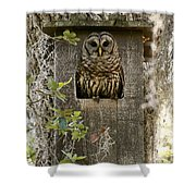 Barred Owl In Nest Box Shower Curtain