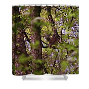 Barred Owl In The Forest Shower Curtain