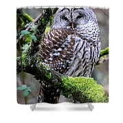 Barred Owl In Tree Shower Curtain