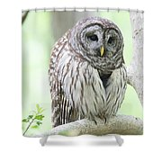 Wings Folded Shower Curtain