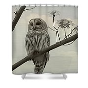 Barred Owl On A Tree Shower Curtain
