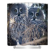 Barred Owls Shower Curtain