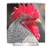 Barred Rock Rooster Shower Curtain