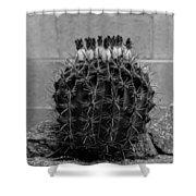 Barrel Against Wall No51 Shower Curtain