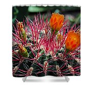 Barrel Cactus II Shower Curtain