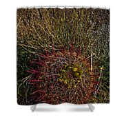 Barrel Cactus Top View Shower Curtain