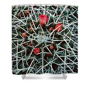 Barrel Cactus With Pink Blooms Shower Curtain
