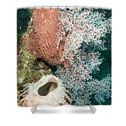 Barrell Sponges And Sea Fans Shower Curtain