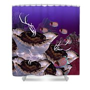 The Jeuter Barrier Reef  Shower Curtain