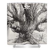 Barringtonia Tree Shower Curtain