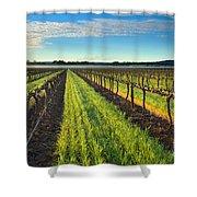 Barrossa Vineyard Sunrise Shower Curtain