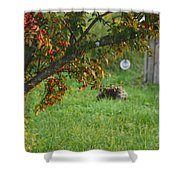 Barton Backyard Shower Curtain