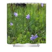 Bartram's Ixia And Bee #3 Shower Curtain