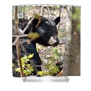 Bashful Black Bear Shower Curtain