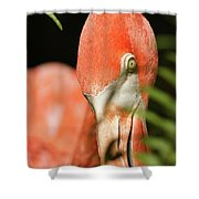 Bashful Shower Curtain