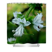 Basil Bloom Shower Curtain
