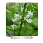 Basil Blossom Shower Curtain