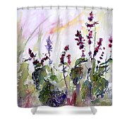 Basil Culinary Herb Watercolor Shower Curtain