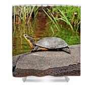 Basking Blanding's Turtle Shower Curtain
