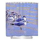 Basking On The Seashore Shower Curtain