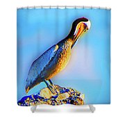 Basking Pelican Shower Curtain
