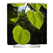 Basswood Leaves Against Dark Forest Background Shower Curtain