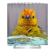 Bath Time Finch Shower Curtain