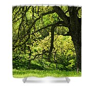 Bathed In Spring Shower Curtain
