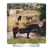 Bathing Horse Shower Curtain