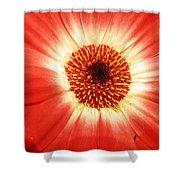 Batik Of A Gerbera Shower Curtain