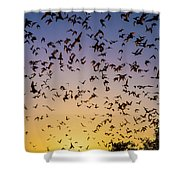 Bats At Bracken Cave Shower Curtain
