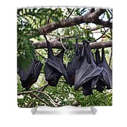 Bats Hanging Out Shower Curtain