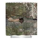 Bats Inside The Pyramid At Grupo Nohoch Mul At The Coba Ruins  Shower Curtain
