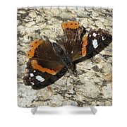 Battered Butterfly Shower Curtain