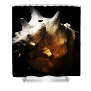 Battered Conch  Shower Curtain