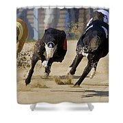 Battle Of The Racing Greyhounds At The Track Shower Curtain