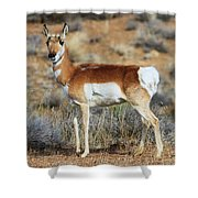 Battle Scar   Shower Curtain