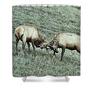 Battling Elk Shower Curtain