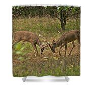 Battling Whitetails 0102 Shower Curtain by Michael Peychich