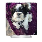 Baxter Boo Goes To The Beach Shower Curtain