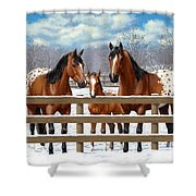Bay Appaloosa Horses In Snow Shower Curtain by Crista Forest